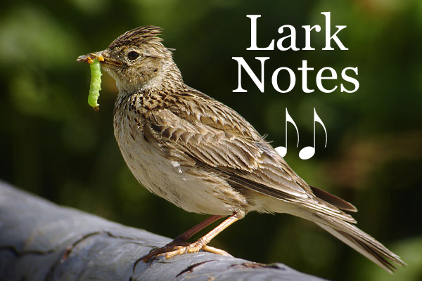 the song of the lark essay Unlike most editing & proofreading services, we edit for everything: grammar, spelling, punctuation, idea flow, sentence structure, & more get started now.