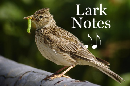 lark-notes-condensed